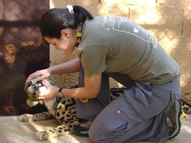 ghepardul la consult