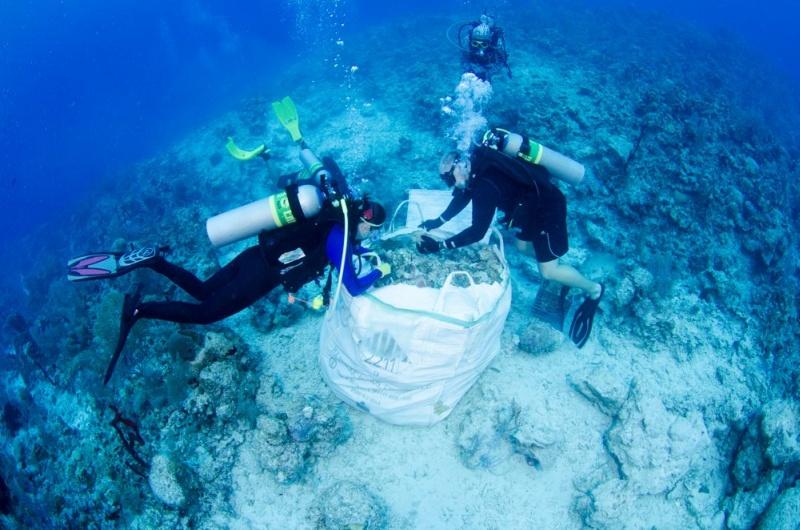 Medic veterinar în Insulele Cayman
