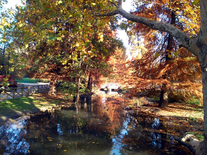 milan central park autumn leaves