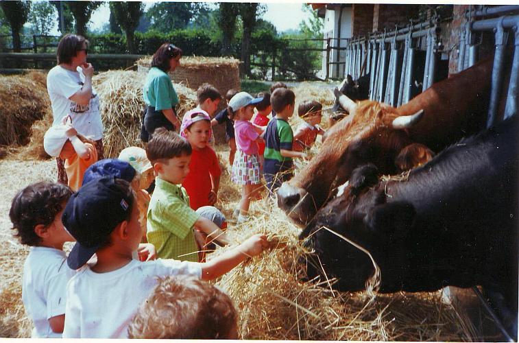Școala în Italia, cu clasa la fermă Foto: Marietta Dobrin