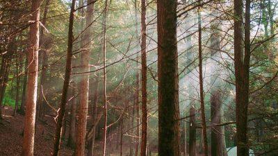Poveste cu un cort și un cuc, într-o pădurice din Olanda