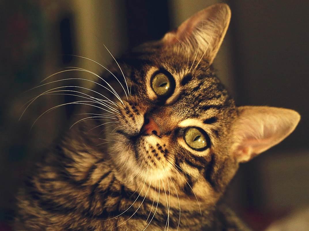 pisica arogantă și neprietenoasă