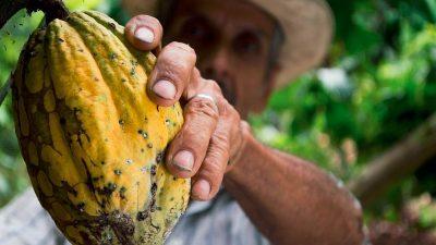 Mondelēz International vrea să asigure un viitor durabil fermelor de cacao