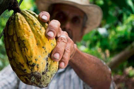 mondelez international sustine activ culturile sustenabile de cacao