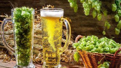 Burse de studiu privind efectele consumului moderat de bere