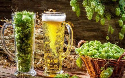 burse pentru studiul consumului moderat de bere