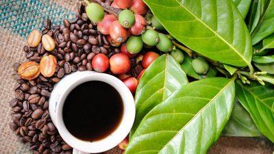 7 curiozități despre cafea