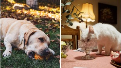 Pisici și căței: ce mănâncă și ce nu? Interviu cu medicul veterinar Raluca Zvorășteanu