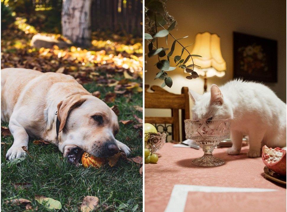 ce mănâncă pisicile și cățeii noștri?