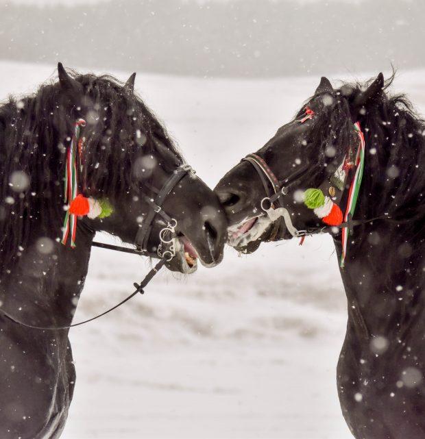 Caii de la Balvanyos